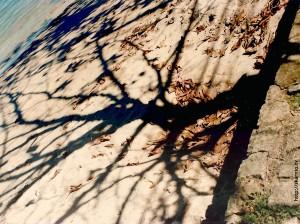 Sombras rizomáticas