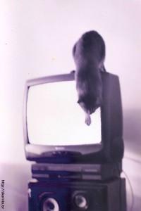 TV a Gato